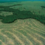 Déforestation amazonienne